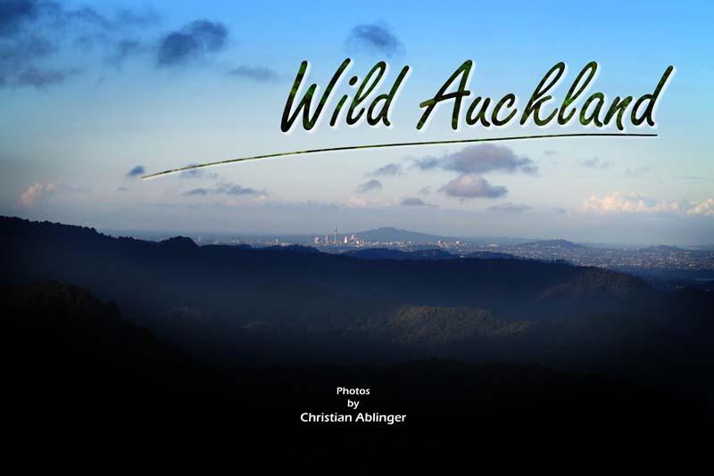 Wild Auckland