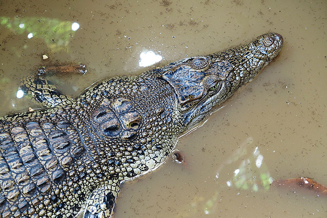 croc_close